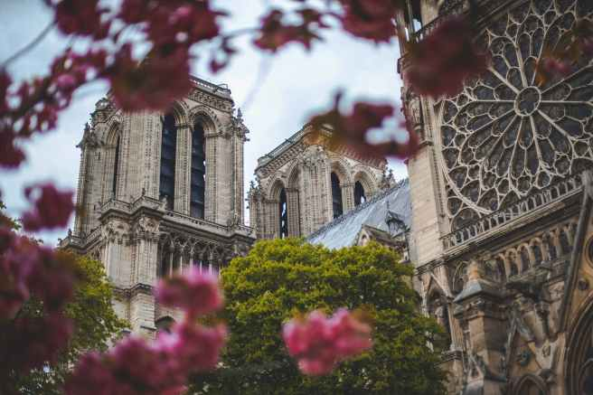 low angle photo of notre dame